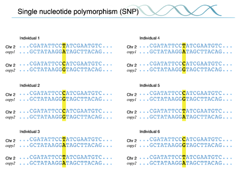 BS8MOLECULARGENETICS10a.png