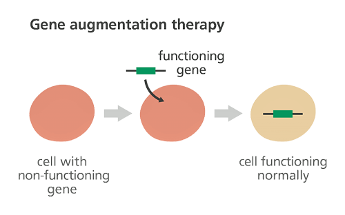 BS8MOLECULARGENETICS16.png