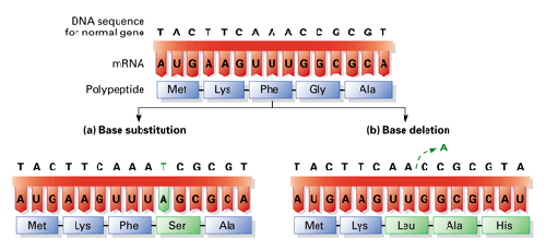 BS8MOLECULARGENETICS2.png